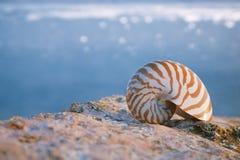 Nautilus Seashellsand auf Sonnenaufgang und Ozean Stockbild