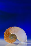Nautilus Royalty Free Stock Photos