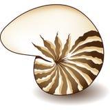 Nautilus Shell Stock Image