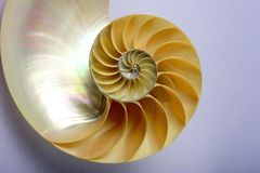Nautilus shell. A cut nautilus shell, in perfect spiral Stock Image