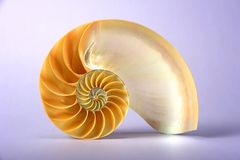 Nautilus shell. A cut nautilus shell, in perfect spiral Royalty Free Stock Photos