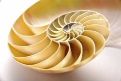 Nautilus Shell. Section as background Stock Images