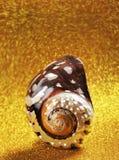Nautilus-Shell. lizenzfreies stockfoto