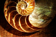 Nautilus shell. Overlap rough pattern in PhotoShop stock images