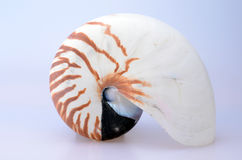 Nautilus Shell Stock Photography