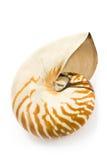 Nautilus shell Royalty Free Stock Photos
