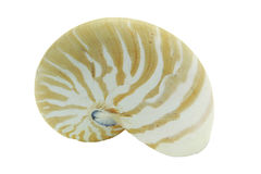 Nautilus Shell Photographie stock
