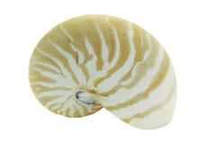 Nautilus Shell Stock Photography