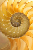 Nautilus Shell Royalty Free Stock Images