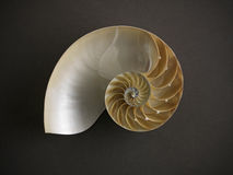 Nautilus Shell Fotografía de archivo libre de regalías