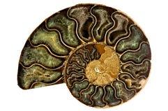 Nautilus-Shell stockbild