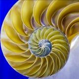 Nautilus Shell Imagens de Stock