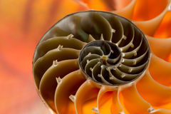 Nautilus Shell Photo stock