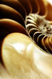 Nautilus shell. Macro detail of a nautilus shell Stock Photos