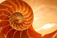 Nautilus shell. Split nautilus seashell showing inner float chambers Stock Photos