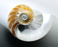 Nautilus Shell. Cut in half on white with shadow Royalty Free Stock Photography