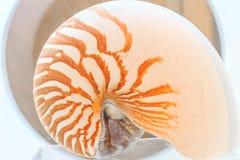 Nautilus Shell Images libres de droits