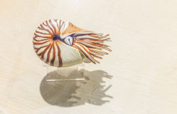 Nautilus Shell Fotografia Stock Libera da Diritti