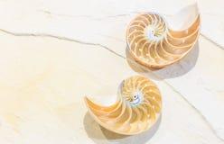 Nautilus Shell Photos libres de droits