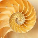 Nautilus Shell Fotos de Stock