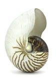 Nautilus-Shell auf Weiß stockfotografie
