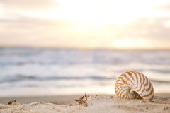 Nautilus shell on beach Royalty Free Stock Image
