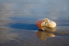 Nautilus shell on beach  and blue sea Stock Photography