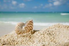 Nautilus shell on beach  and blue tropical sea. Shallow dof Royalty Free Stock Photos