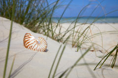 Nautilus shell on beach  grass and tropical sea. Nautilus shell on beach grass  and tropical sea Stock Image