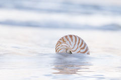 Nautilus shell on beach, pale sunrise light and  tropical sea Stock Image