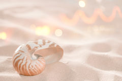 Nautilus shell on beach sand Royalty Free Stock Photos