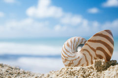 Nautilus shell on beach sand Royalty Free Stock Photography