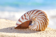 Nautilus shell on a beach sand, against sea Royalty Free Stock Image