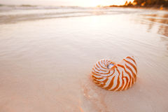 Nautilus shell on beach in sunrise light, seascape Royalty Free Stock Images