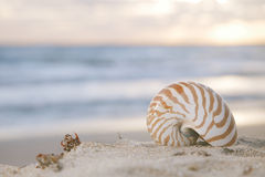 Nautilus shell on beach, sunrise and  tropical sea Stock Photo