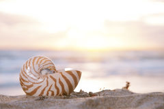 Nautilus shell on beach, sunrise and  tropical sea Stock Photos