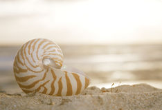 Nautilus shell on beach, sunrise and  tropical sea Stock Images