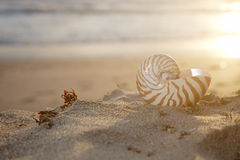 Nautilus shell on beach under golden sun royalty free stock photos