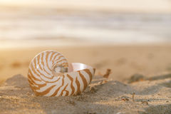 Nautilus shell on beach  under  sun beams Stock Images
