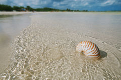 Nautilus shell  in blue sea wave Royalty Free Stock Photography