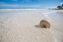 Nautilus shell on beact in blue sea wave Royalty Free Stock Photos