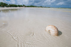 Nautilus shell  in blue sea wave Royalty Free Stock Photos