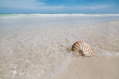 Nautilus shell  in blue sea wave Stock Photo