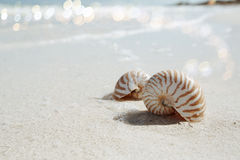 Nautilus shell  in blue sea wave, shallow dof Royalty Free Stock Image
