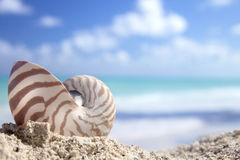 Nautilus shell on  a caribbean beach Royalty Free Stock Image