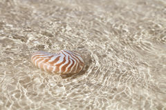 Nautilus shell in crystal clear sea water Stock Image