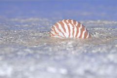 Nautilus shell in crystal clear sea water Royalty Free Stock Photography