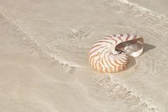 Nautilus shell in crystal clear sea water and sand Royalty Free Stock Photos