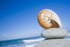 Nautilus-Shell durch das Ufer Stockbilder