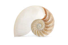 Nautilus shell and famous geometric pattern. A perfect and amazing fibonacci pattern in a nautilus shell royalty free stock image